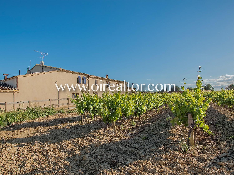 31005553 2535474 foto 017774 - Rustic style and beautiful vineyards in Avinyonet del Penedés (Barcelona)