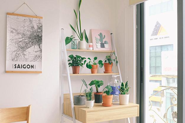 decoracion plantas - New Decor Trends for Autumn 2020