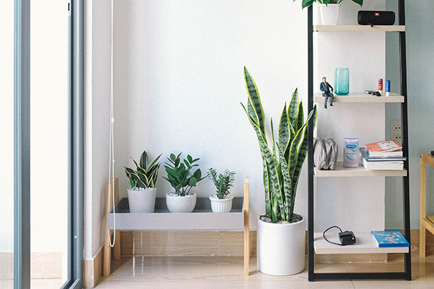 planta - Revamp the look of your home: decoration trends for spring 2021