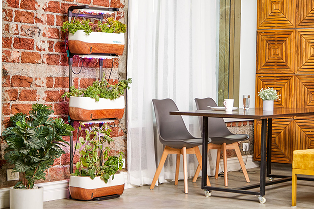 plantas terraza - Easy, affordable ideas to decorate a terrace